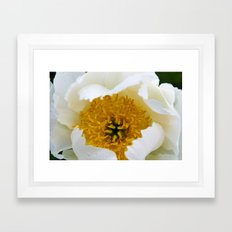 White French Poppy Framed Art Print