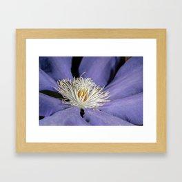 Blue clematis close up Framed Art Print