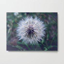 dandelion dreams Metal Print