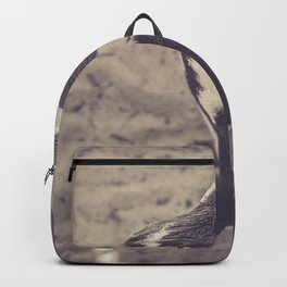 Adorable African Penguin Series 2 of 4 Backpack