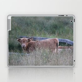 Higland Cow On The Lookout Laptop & iPad Skin