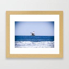 Soaring the Shores Framed Art Print