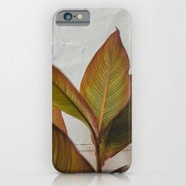Green Orange Leaves | Puglia Italy Europe | Fine Art Travel Photography | grey colored art print  iPhone Case