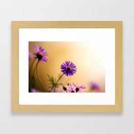 Dreamy flowers bathed in soft whispery light Framed Art Print