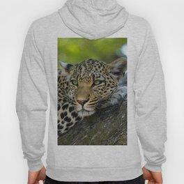Aqua_Leopard_20180101_by_JAMColorsSpecial Hoody