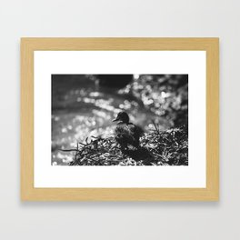 Duck contemplation Framed Art Print