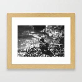 Duck contemplation Framed Art Print