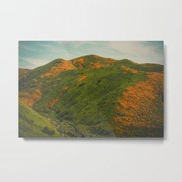 California Poppies 038 Metal Print