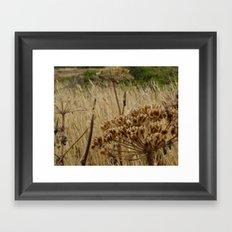 Navaro Bluffs, fall flowers III Framed Art Print