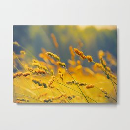 Yellow Wheat Field Metal Print