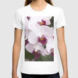 Longwood Gardens Orchid Extravaganza 4 T-shirt