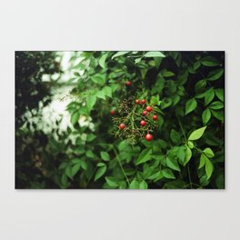 Poison Fruit Canvas Print