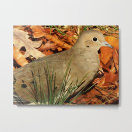 Fall mourning dove Metal Print