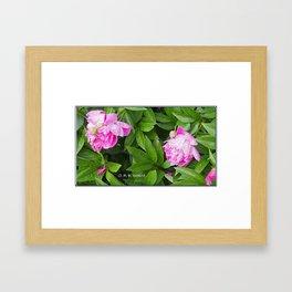 Pivoines dans le jardin Framed Art Print