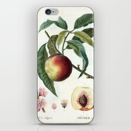 Peach on a branch iPhone Skin