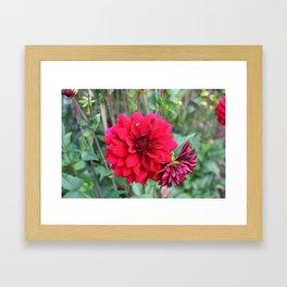 Blooming Red Framed Art Print