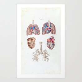 Vintage Anatomy of Human Heart and Lungs Art Print