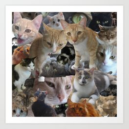 Cats of the neighborhood Art Print