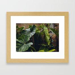 Elephant Ears Framed Art Print