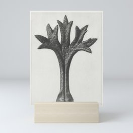 Saxifraga Willkommniana (Willkomms Saxifrage) leaf enlarged 18 times from Urformen der Kunst (1928) Mini Art Print