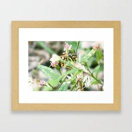 Pollinating Hunter Framed Art Print