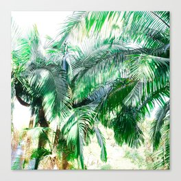 The wild shadow tropical palm tree green bright photography Canvas Print