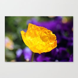 Yellow Poppy 2 Canvas Print