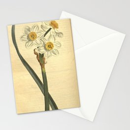 Flower 940 narcissus orientalis Narcissus of Levant10 Stationery Cards