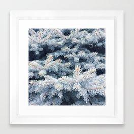 Spruce Framed Art Print