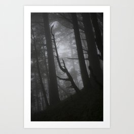 Dark Forest Art Print