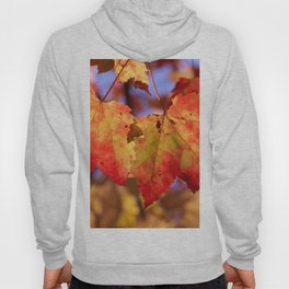 Autumn in Canada - Maple leafs Hoody