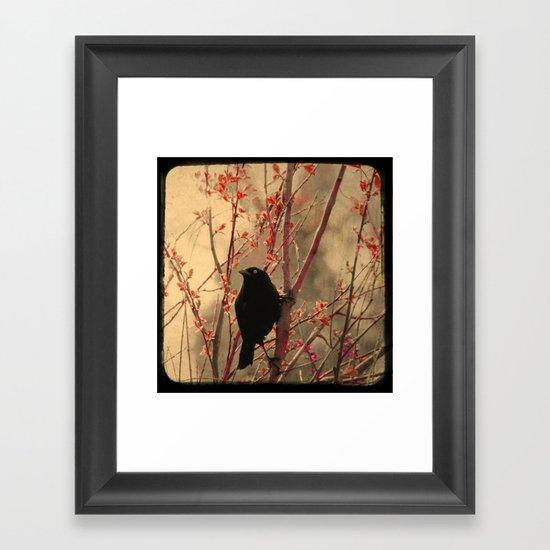 Grackle  Framed Art Print