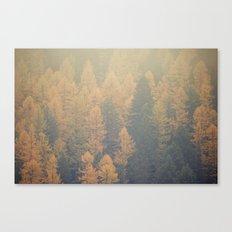 Larch Canvas Print