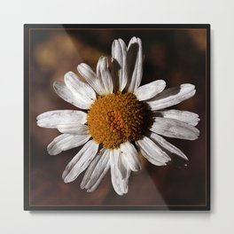 Colorado Wild Flower Metal Print