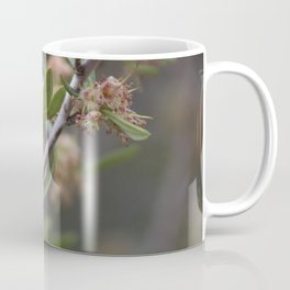 Closeup Mountain Laurel in Utah Coffee Mug