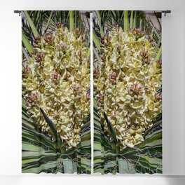 Yucca_Plant in Full Bloom, California Blackout Curtain