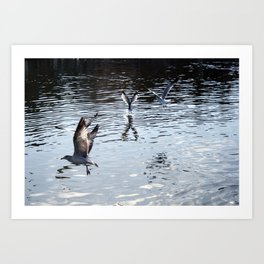 Taking Flight Art Print