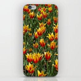 Tulipes iPhone Skin