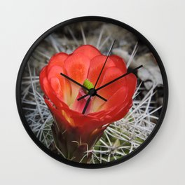 Red Blossom on a Hedgehog Cactus Wall Clock