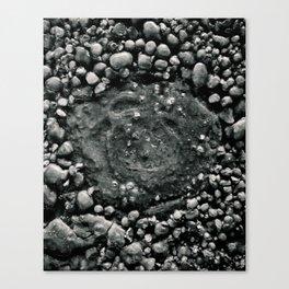 Frozen Pebbles Canvas Print
