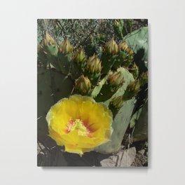 Yellow Cactus Flower II Metal Print