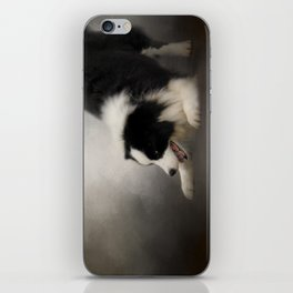 Ready to Play - Border Collie iPhone Skin