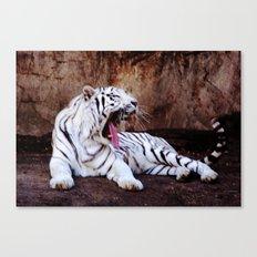 Tiger Yawn Canvas Print