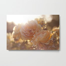 "Flower Art Print - Sunray, Flare - Coral Pink, Peach, Yellow Photo - Fine Art - ""Yellow-Pink Roses"" Metal Print"