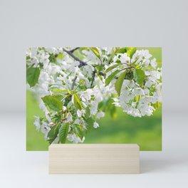 White cherry blossoms romance Mini Art Print