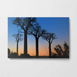 Baobab Trees in Madagascar Metal Print