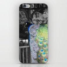Fascinator iPhone & iPod Skin