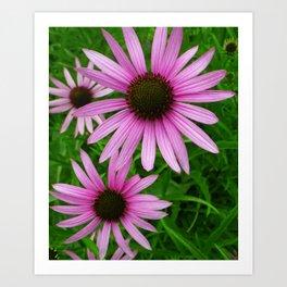 Pink Coneflowers Art Print