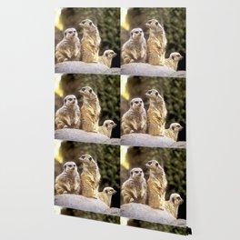 Act Natural Meerkats Wallpaper