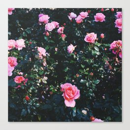 city of roses Canvas Print